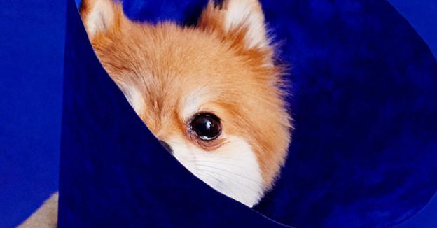 13 photos de chiens qui méritent d'être accrochés au Louvre